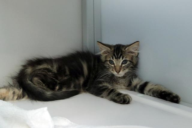 My name at SAFE Haven was Flufftail and I was adopted!