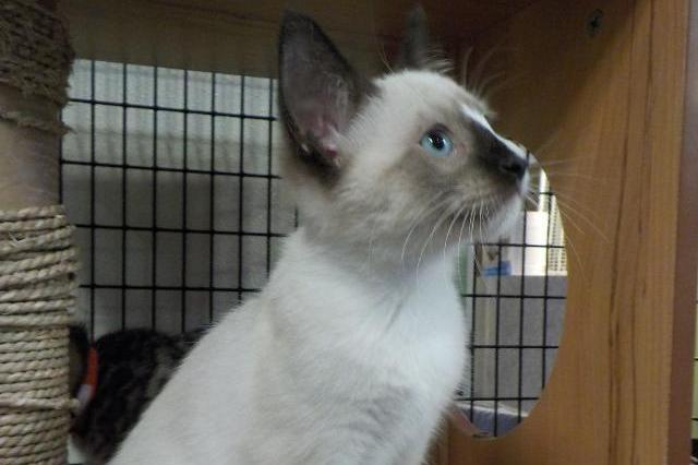 My name at SAFE Haven was Colfax and I was adopted!
