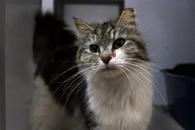 My name at SAFE Haven was Feathers and I was adopted!