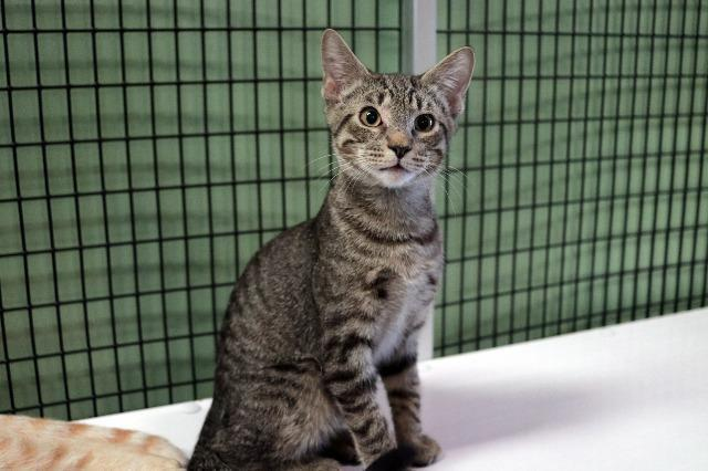 My name is Grover and I am ready for adoption. Learn more about me!