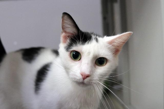My name at SAFE Haven was Elly May and I was adopted!