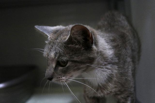 My name at SAFE Haven was Bobbie June and I was adopted!