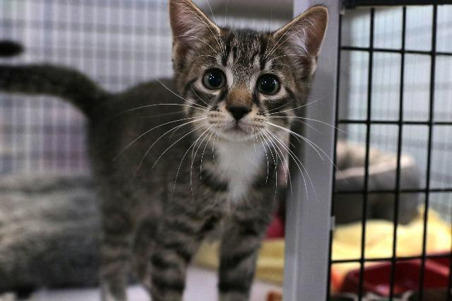 My name at SAFE Haven was Bolero and I was adopted!