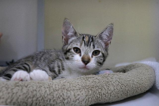 My name at SAFE Haven was Posh Spice and I was adopted!
