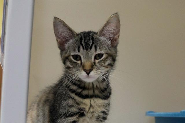 My name is Sporty Spice and I am ready for adoption. Learn more about me!