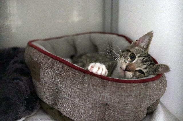 My name is Baby Spice and I am ready for adoption. Learn more about me!