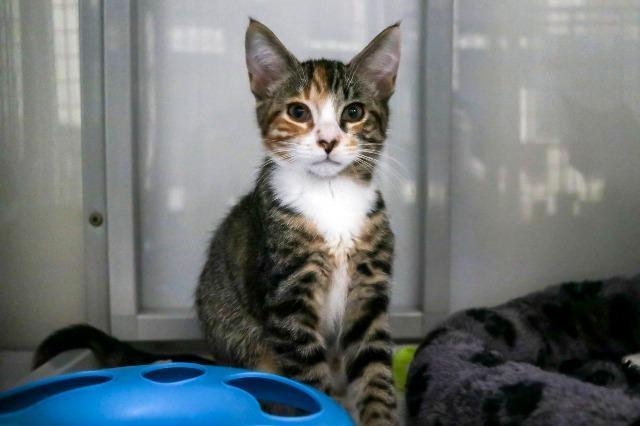 My name at SAFE Haven was Ginger Spice and I was adopted!