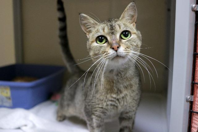 My name at SAFE Haven was Forsyth and I was adopted!