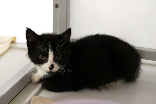 My name at SAFE Haven was Sugarcane and I was adopted!