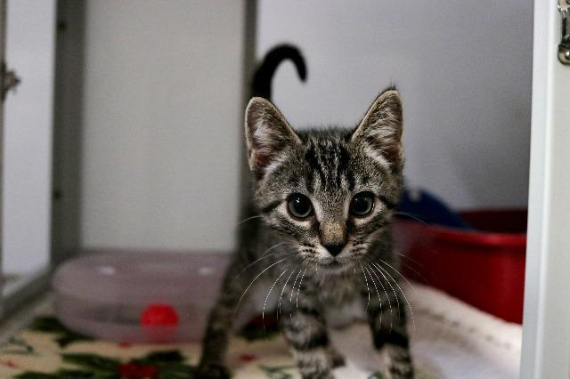 My name at SAFE Haven was Pumpernickel and I was adopted!