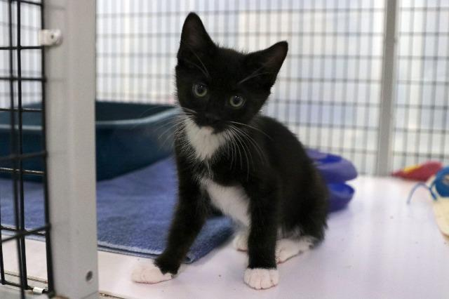 My name at SAFE Haven was Cub and I was adopted!