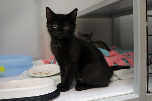 My name at SAFE Haven was Lamb and I was adopted!