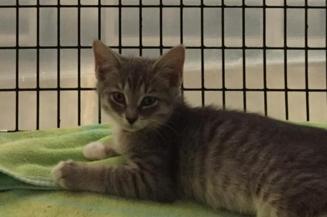 My name at SAFE Haven was Keet and I was adopted!