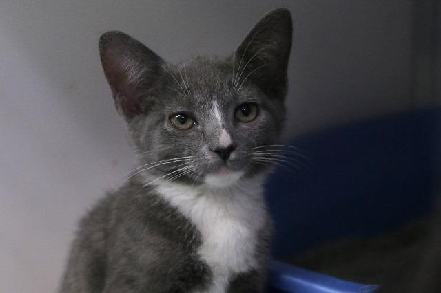 My name at SAFE Haven was Lara Croft and I was adopted!