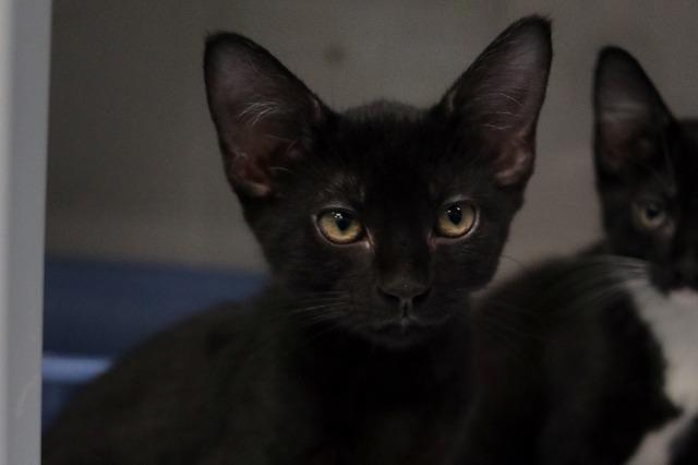 My name at SAFE Haven was Pong and I was adopted!