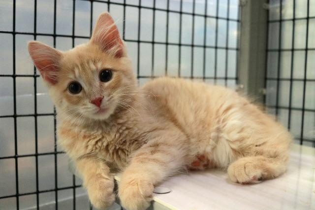 My name at SAFE Haven was Cheddar and I was adopted!