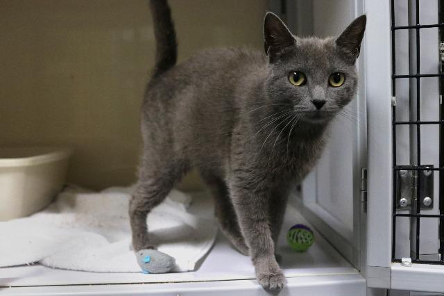My name at SAFE Haven was Sultana and I was adopted!