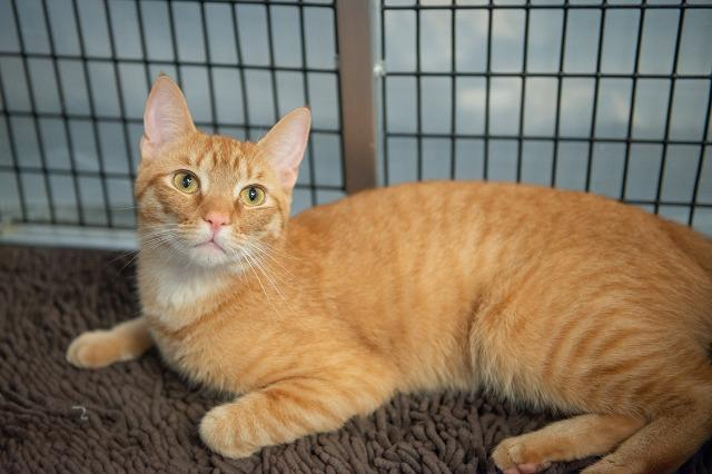 My name is Lowell and I am ready for adoption. Learn more about me!
