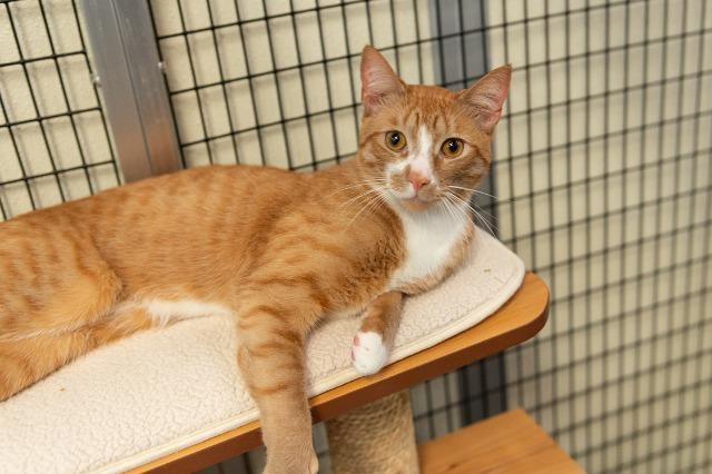My name is Leland and I am ready for adoption. Learn more about me!