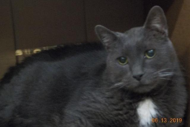 My name is Smokey Joe and I am ready for adoption. Learn more about me!
