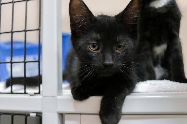 My name at SAFE Haven was Stephen Strange and I was adopted!