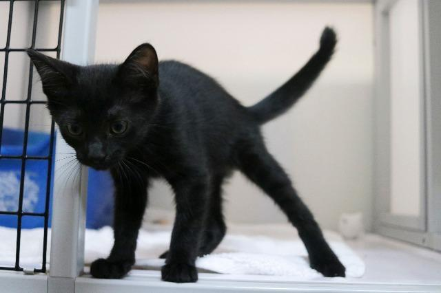 My name at SAFE Haven was Steve Rogers and I was adopted!
