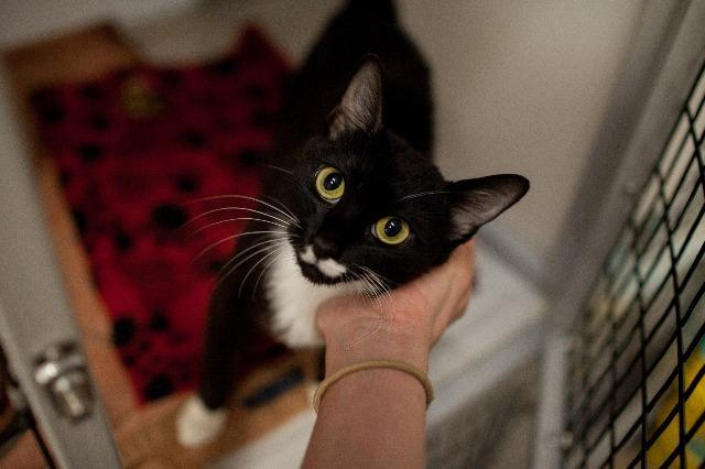 My name is Lula Moon and I am ready for adoption. Learn more about me!