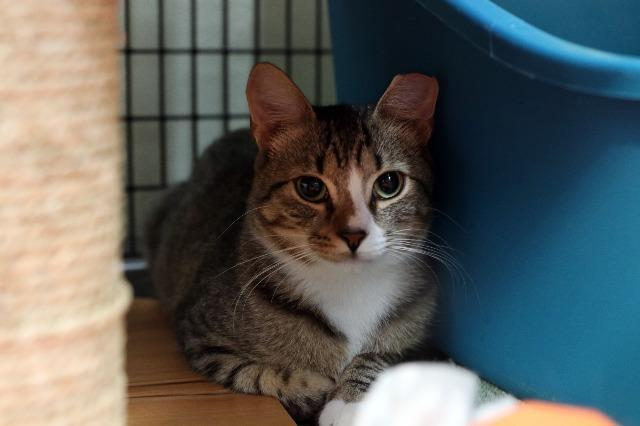 My name is Mountaineer and I am ready for adoption. Learn more about me!