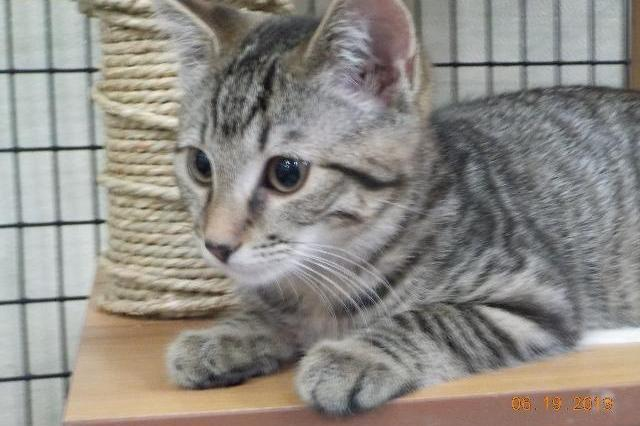 My name at SAFE Haven was Banana Fritter and I was adopted!