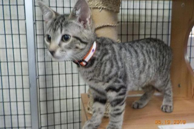 My name at SAFE Haven was Chai Muffin and I was adopted!