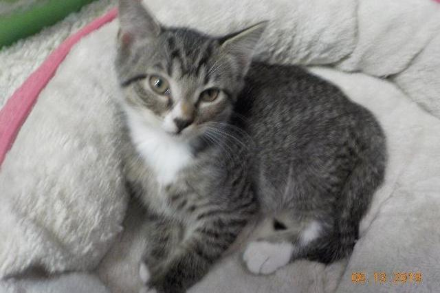 My name at SAFE Haven was James Brown and I was adopted!