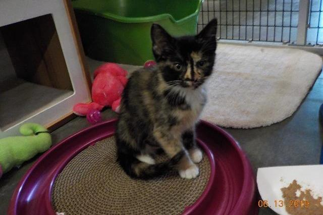 My name at SAFE Haven was Nina Simone and I was adopted!