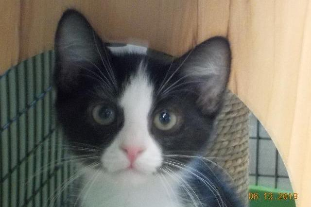 My name at SAFE Haven was Solomon Burke and I was adopted!