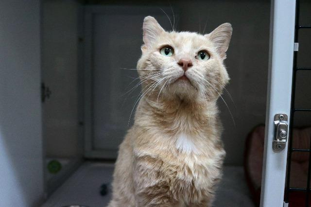 My name is Brawny and I am ready for adoption. Learn more about me!