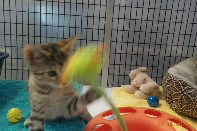 My name at SAFE Haven was Wild Pansy and I was adopted!