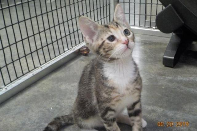 My name is Darling Heather and I am ready for adoption. Learn more about me!