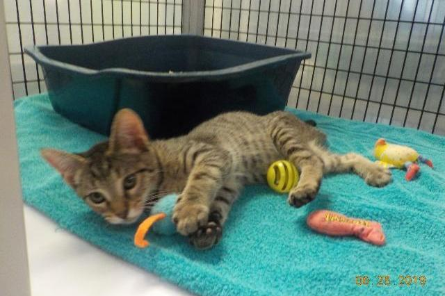 My name at SAFE Haven was Mossy Stone and I was adopted!