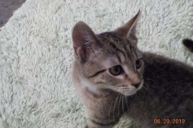 My name at SAFE Haven was Conchita and I was adopted!
