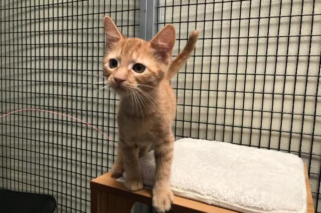 My name at SAFE Haven was James T. Kirk and I was adopted!