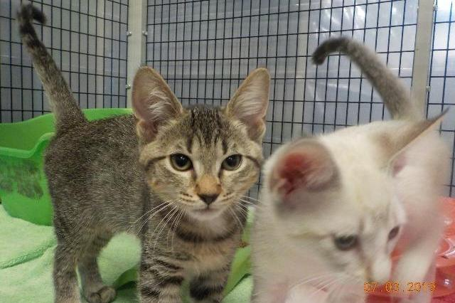 My name at SAFE Haven was Sedalia and I was adopted!