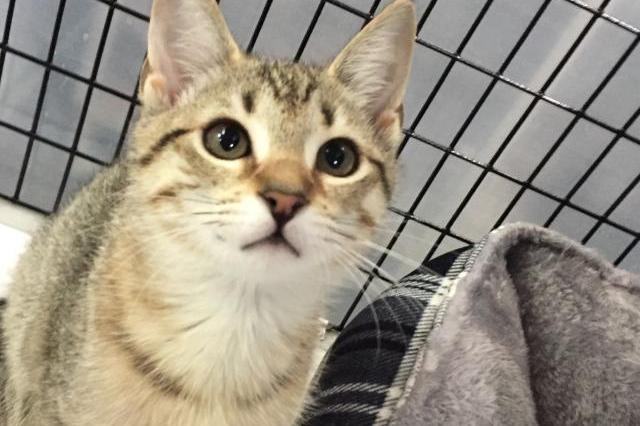 My name is Olivia and I am ready for adoption. Learn more about me!