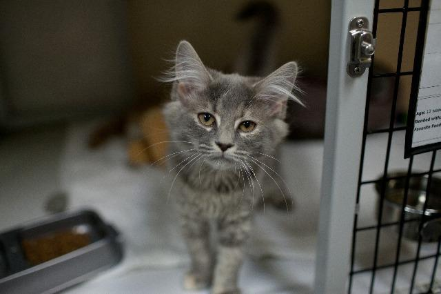 My name at SAFE Haven was Raspberry Meringue and I was adopted!