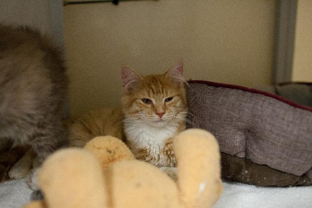 My name at SAFE Haven was Lemon Chiffon and I was adopted!