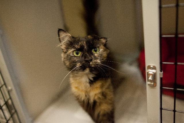 My name is Sora and I am ready for adoption. Learn more about me!