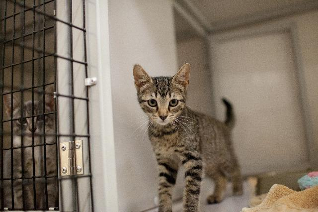 My name is Navassa and I am ready for adoption. Learn more about me!