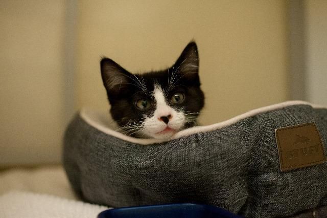 My name at SAFE Haven was Elmo and I was adopted!