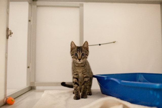 My name at SAFE Haven was Bunsen Honeydew and I was adopted!