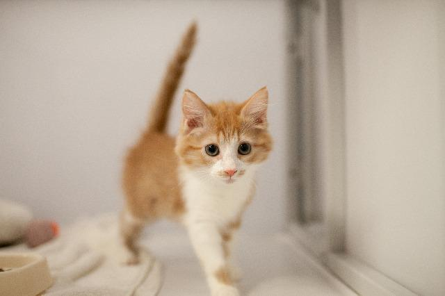 My name at SAFE Haven was Sweetums and I was adopted!