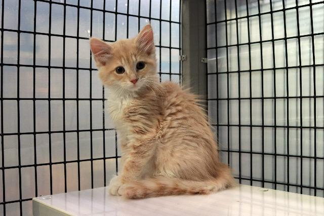 My name at SAFE Haven was Camembert and I was adopted!