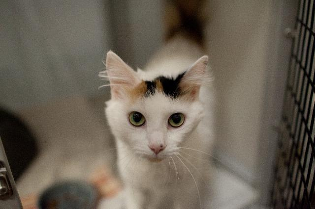My name is Aria Blaze and I am ready for adoption. Learn more about me!